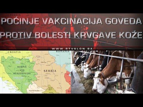 Počinje vakcinacija goveda protiv bolesti krvgave kože - 27.04.2017.