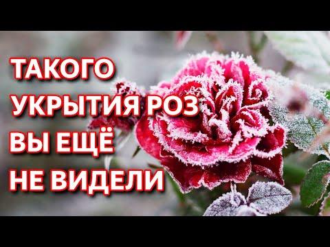 Как обрезать розы на зиму и укрывать. Проверенный способ обрезки роз.