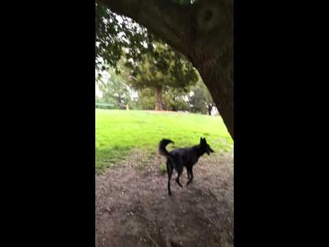 Lilly tree jumping dog