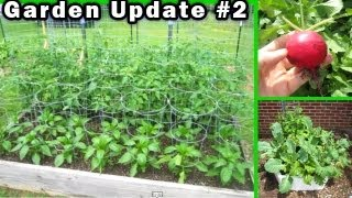 Garden Update 2 - May 20th Raised Bed Container Gardening Vegetable Tomato How To Build