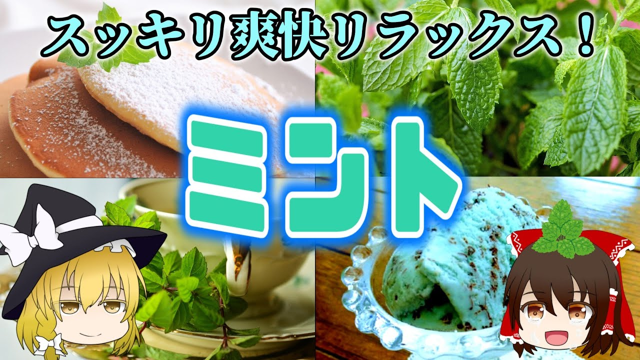 【ゆっくり解説】爽快感だけじゃない!ミントの栄養について解説!