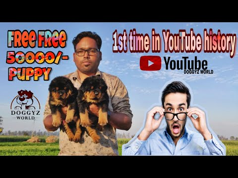 Free Free Free 50000/- Puppy,1st Time On You Tube History, For Free Adoption ,Doggyz World
