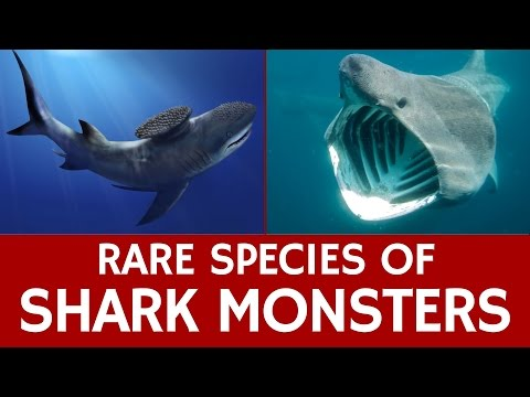 10 Rare Sharks, Endangered Species And Extinct Prehistoric Marine Monsters