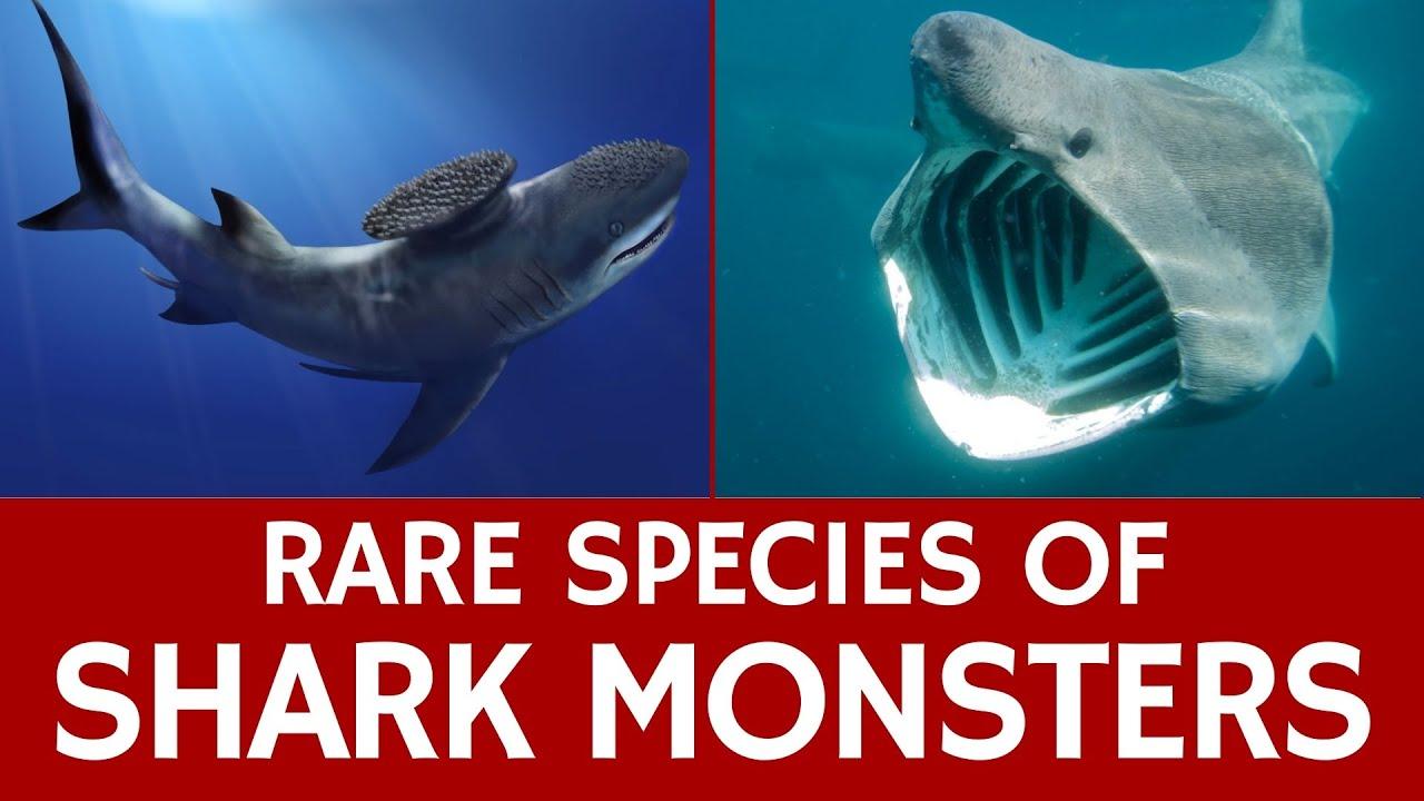 Rare Sharks