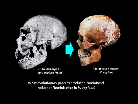 CARTA:Domestication and Human Evolution - Robert Franciscus: Craniofacial Feminization in Evolution