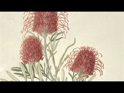 Images of Nature and the Museum's treasured artworks | Natural History Museum