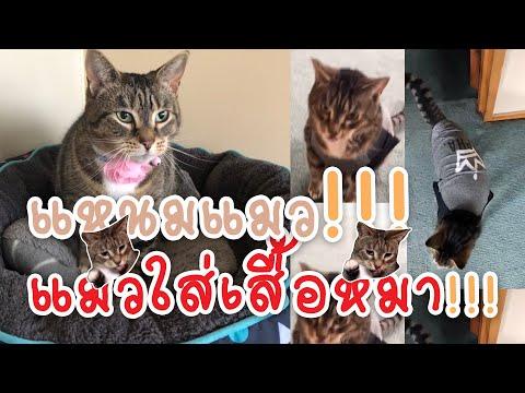 แมวใส่เสื้อหมา!!! อยากย้ายไปอยู่เกาะแมวญี่ปุ่นนักเชียว!!!