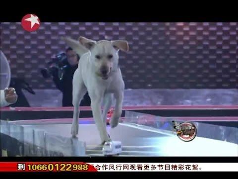 Top Dog狗狗初赛最终场(第八期)完整版 忠犬仔仔百里寻主