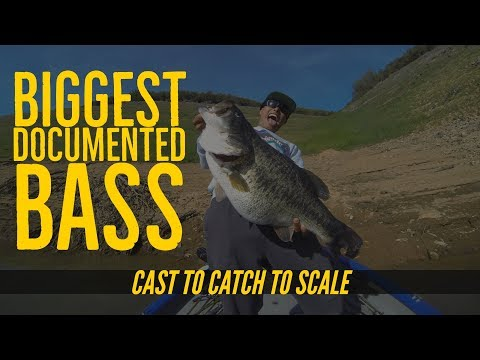 Biggest Bass Ever Documented on Video Cast to Catch to SCALE