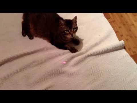 The documentary on Mai cat
