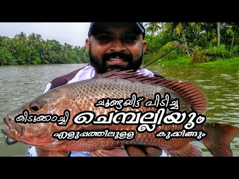 Catching and cooking Mangrove Jack fish/ choondayil pidicha chemballi