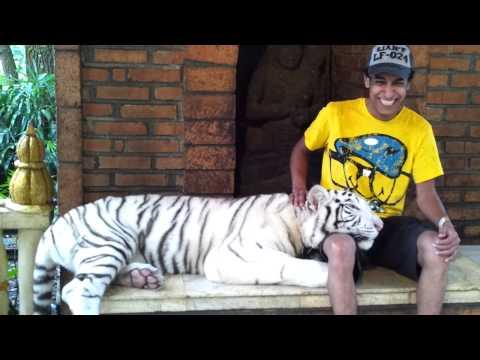 Taman safari tiger waite