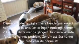 Chili en aggressiv hund?