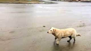 Собаки Машино Кусаки или Нападение в г. Липовец на Машины
