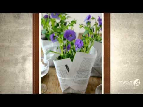 Viola - garden plants