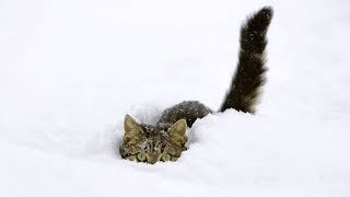 The Ultimate Funny Cats Discovering and Playing in Snow Compilation [NEW]