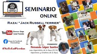 JACK RUSSELL TERRIER   SEMINARIOS ONLINE   FEAT. FERNANDA LÓPEZ SANTISO   #CHEVEREDOGS