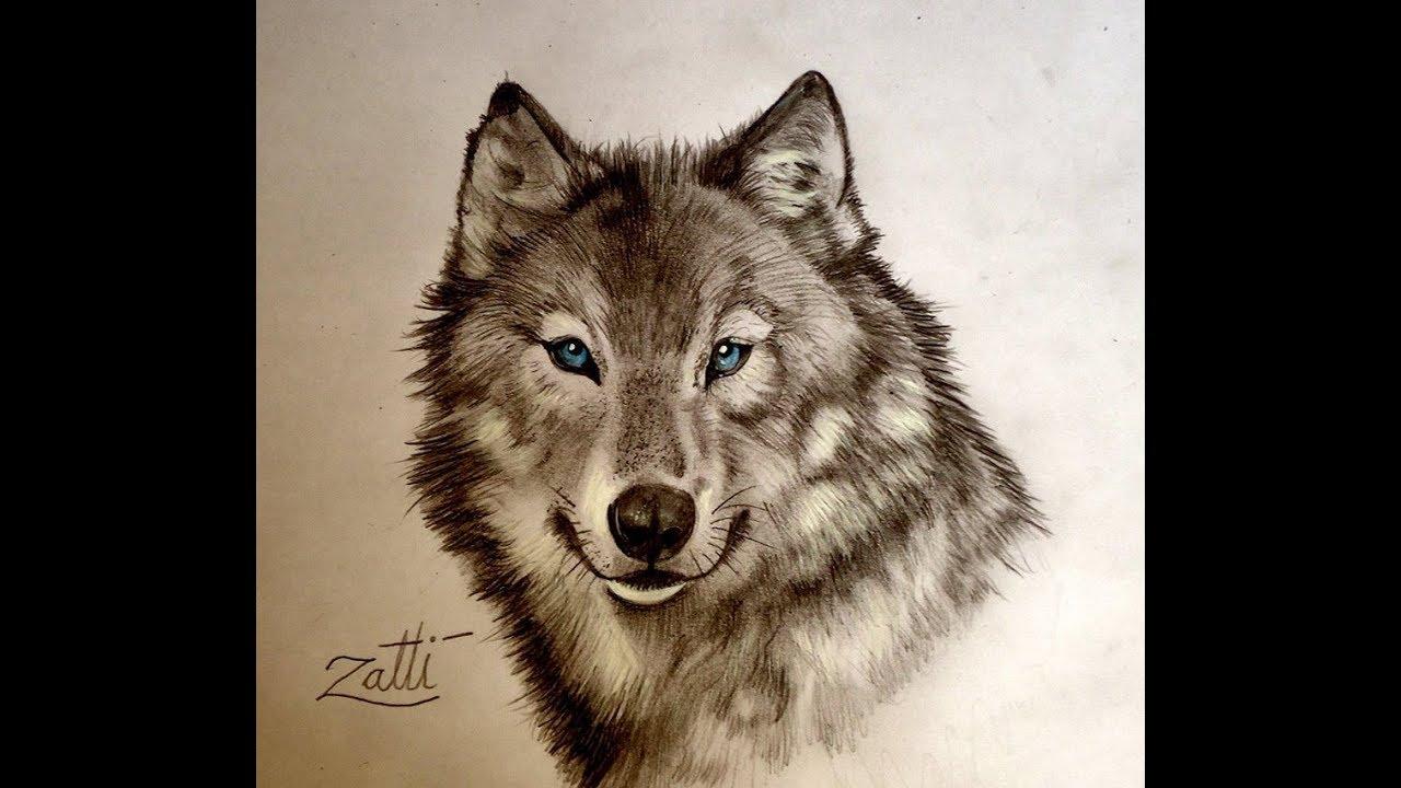 Como Desenhar Um Lobo De Olhos Azuis Youtube