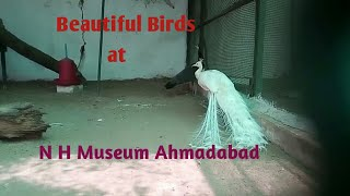 Variety of Beautiful Birds at Balvatika and N. H. Museum Ahmedabad | Best Place to Visit |