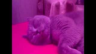 Спящий кот и непослушный язык