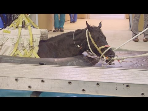 Waking from Anesthesia in a Pool | Life at Vet U