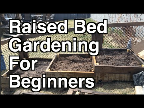 Raised Bed Gardening For Beginners. Site Selection, Organic Soil And Mulch    YouTube