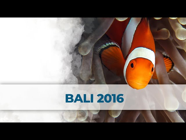 2 Little Divers - Buceo / Diving Bali 2016