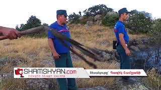 Բյուրականի անտառներում առաջացած հրդեհի դեմ պայքարում են ոստիկանները, փրկարարներն ու գյուղացիները