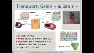 Bacterial transport and secretion