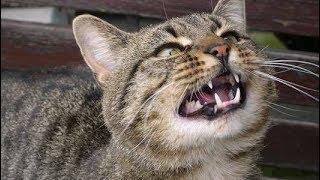 Weird Cat Noises Compilation 2019