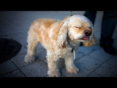 Funny Sneezing Dogs 😂🐶 Cute and Funny Sneezing Dogs (Full) [Funny Pets]