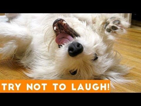 LAUGH CHALLENGE - Funniest Animal Videos