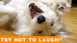 LAUGH CHALLENGE - Funniest Animal Videos