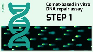STEP 1: Preparation of substrate cells // Comet-based in vitro DNA repair assay