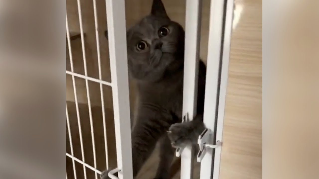 Smart Cat Figures Out How To Unlock Cage To Escape