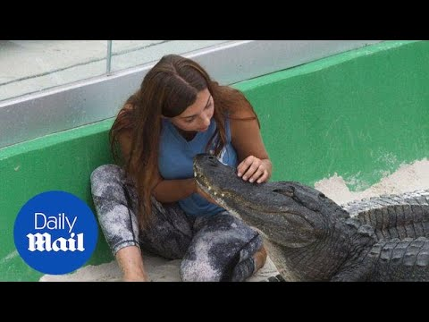 Meet Gabby, the 22-year-old professional alligator wrestler - Daily Mail