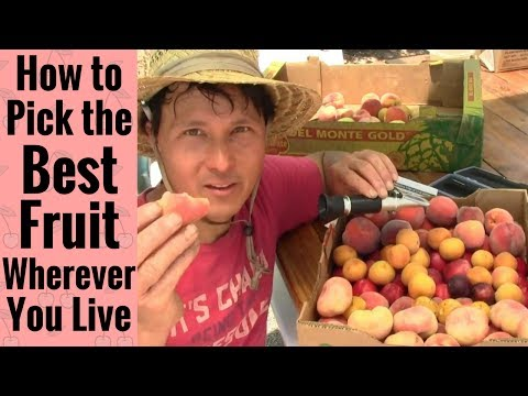 How to Pick the Best Fruit in Las Vegas or Wherever You Live