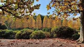 (도쿄산책) 일본 도심 공원의 끝장판 신주쿠 교엔의 가…