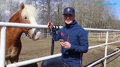 Hevosurheilun mobiilisovellus Hannu Torvinen