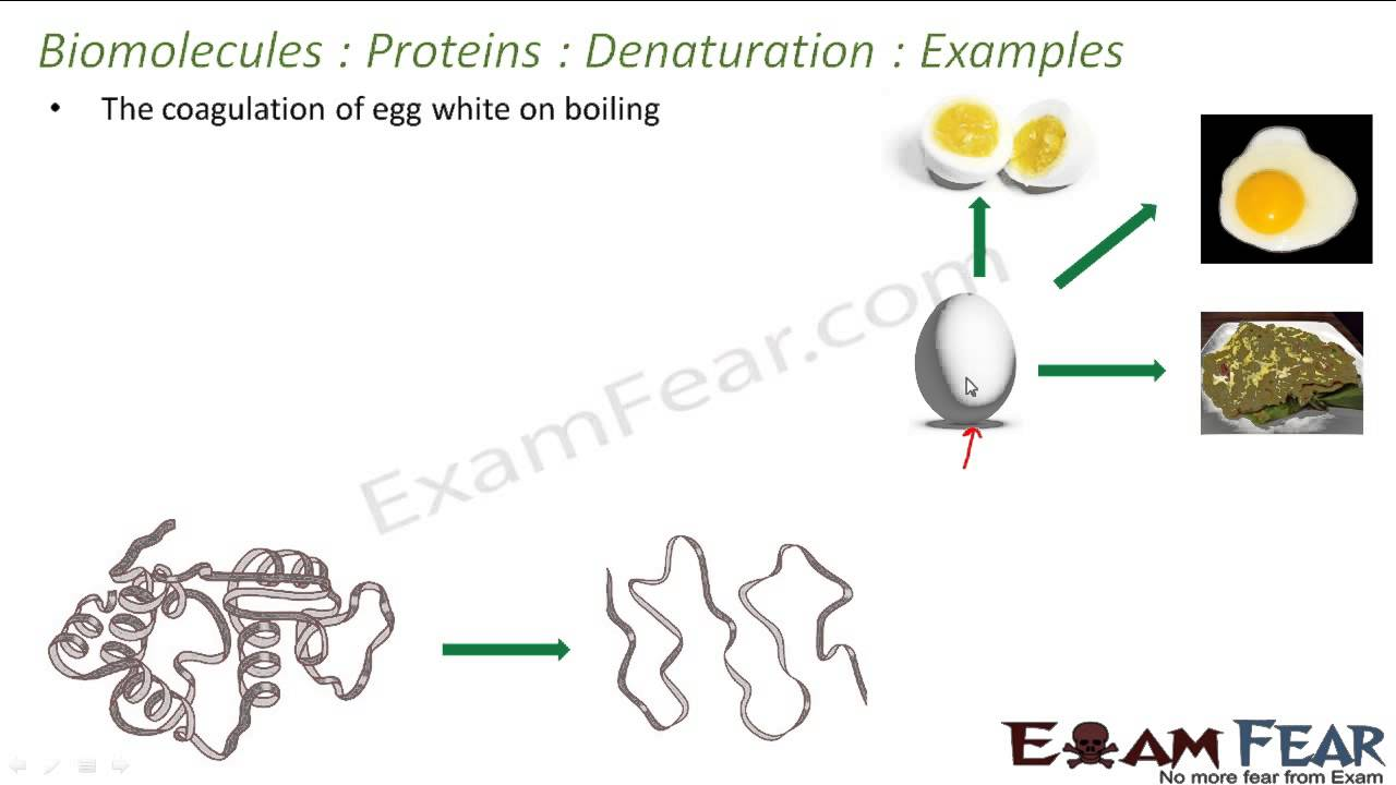 Chemistry Biomolecules Part 18 Denaturation Of Proteins Examples