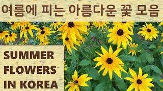 여름에 피는 아름다운 꽃 모음 SUMMER FLOWER…