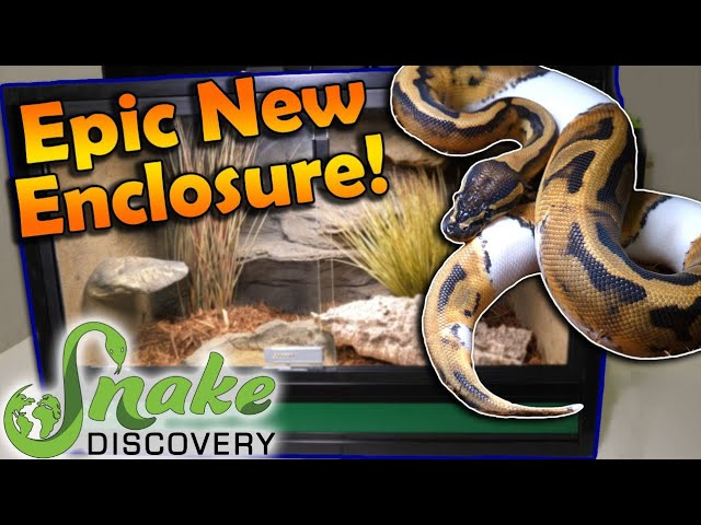 New Snake Discovery Enclosure How To Build And Decorate It Youtube