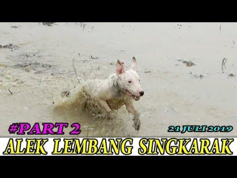 Buru Alek Lembang Singkarak Part 2