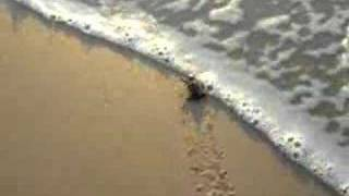 baby sea turtle found in Mexico