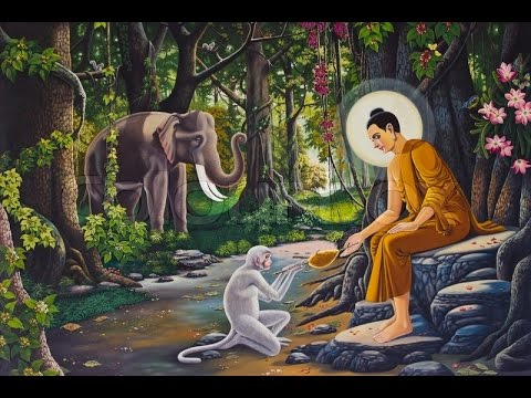 Buddhism ( The Law of Karma ) - YouTube