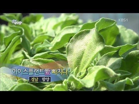 [6시내고향-창원] 아이스플랜스 - 경남 함양 (2018.03.15,목)