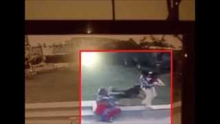 Boy Fights Off German Shepherd Dog To Save Baby Sister In Ahmedabad