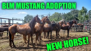 BLM MUSTANG ADOPTION | NEW HORSE!