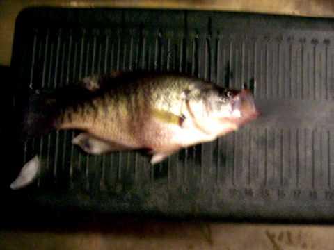 Badin lake pollution doovi for Badin lake fishing