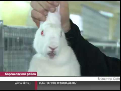 В селе Первая падь начала работу самая крупная ферма кролиководства на Сахалине